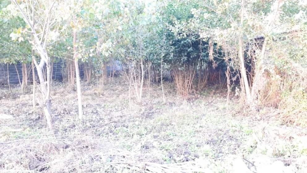 زمین ۵۰۰ متری مسکونی در استان گیلان جاده پیربازار به خمام روستای جیرسرباقرخاله-3-jpg